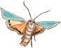 moth_edited-2